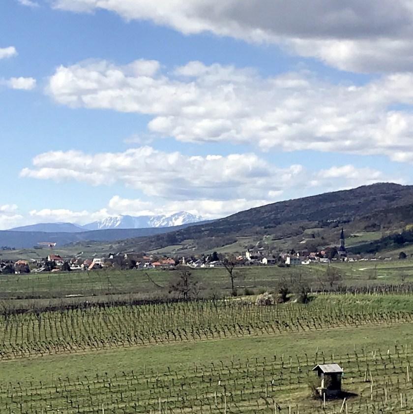 Gumpoldskirchen mit Schneeberg und Anninger