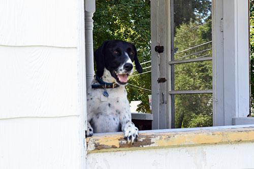 Happy Porch Goose