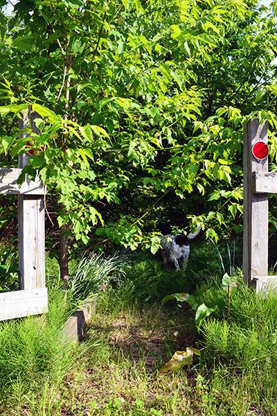 Old Overgrown Flower Garden Path