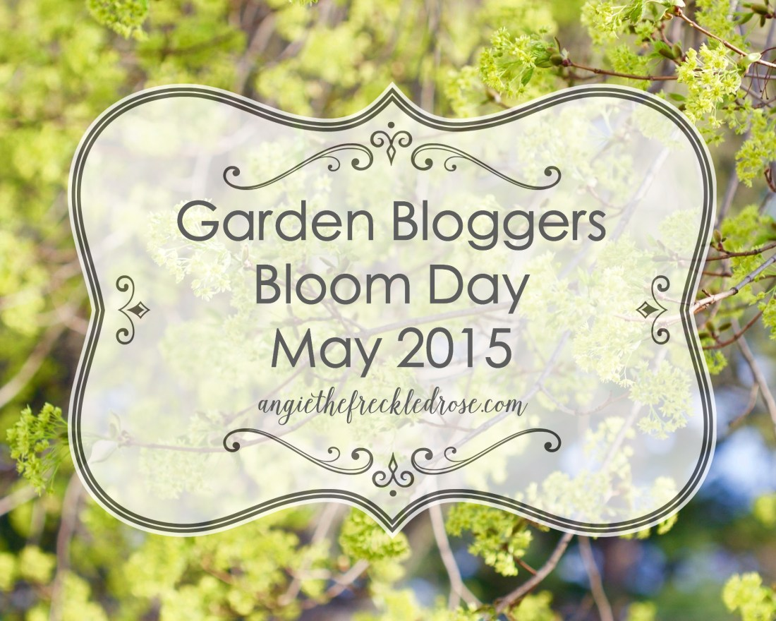 Garden Bloggers Bloom Day May 2015