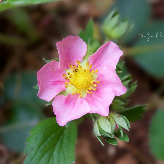 Garden Bloggers Bloom Day – May