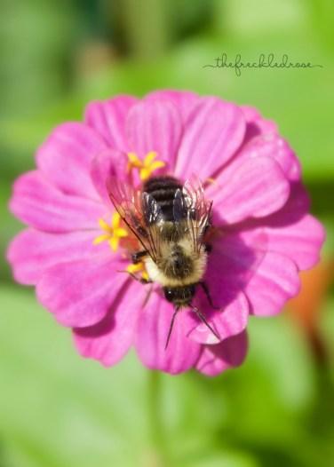 Bee Loving Zinnias