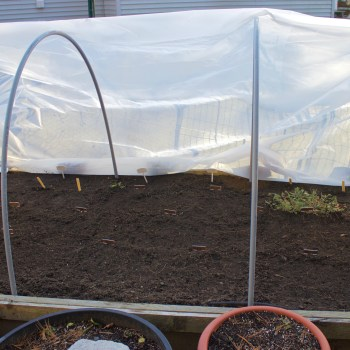 Starting A Winter Vegetable Garden