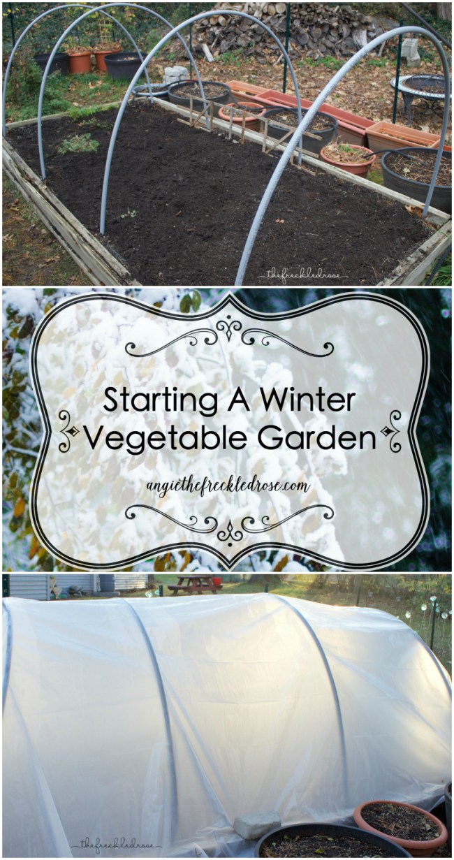 My raised garden bed is 11 feet long and 5 feet wide.  The hoop house consists of four 10 foot 1/2-inch PVC conduit.  I purchased these at my local hardware store for $1.59 a piece.  PVC conduit is flexible and sturdy enough to prevent it from collapsing under the snow.  Luckily, I did not have to cut or change the original size in any way.  I then bent them into the position and shape I wanted.  After adding the PVC conduit, I prepped my bed by adding new soil along with fertilizer.