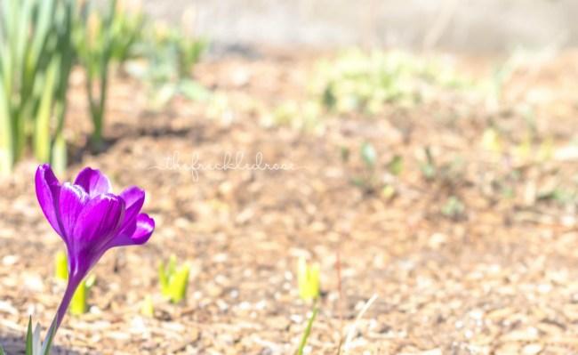 Tuesdays In The Garden-Spring Garden