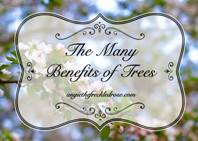 The Many Benefits Of Trees | angiethefreckledrose.com