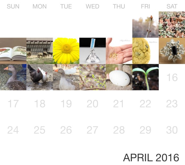 April Rose Calendar : Project weeks  angie the freckled rose