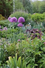 A Beginners Guide To Alliums | angiethefreckledrose.com