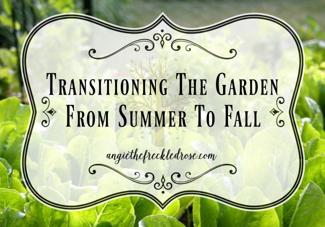 Transitioning The Garden From Summer To Fall | angiethefreckledrose.com