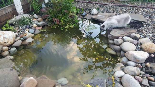 Dishing It & Digging It | How To Install A Pond | angiethefreckledrose.com