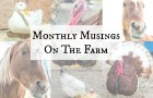 Monthly Musings On The Farm: Winter Edition | angiethefreckledrose.com