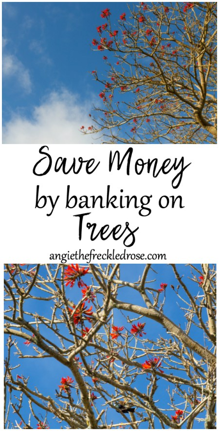 Save Money by Banking on Trees | angiethefreckledrose.com