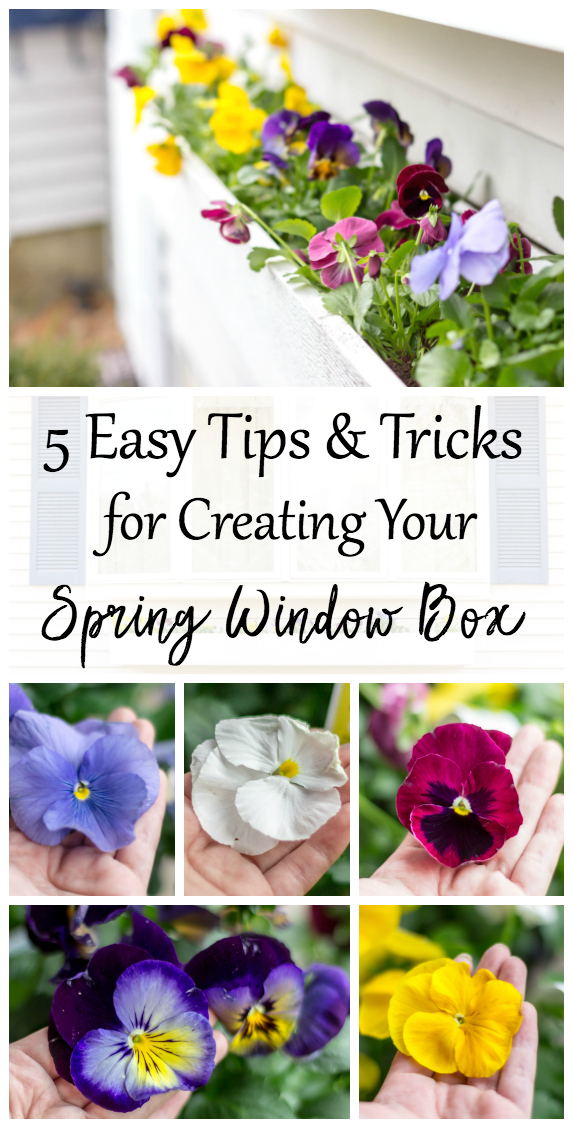 have been planting window boxes for years. Over time, I have developed a certain style and favorite flower for each season. Every box is different, and can easily be planted in no time. I love mixing trailing vines with colorful blooms that put on a show. I am constantly scrolling through Pinterest collecting new ideas. I can't wait to share with you some of my favorite tips and tricks to create a spring window box.