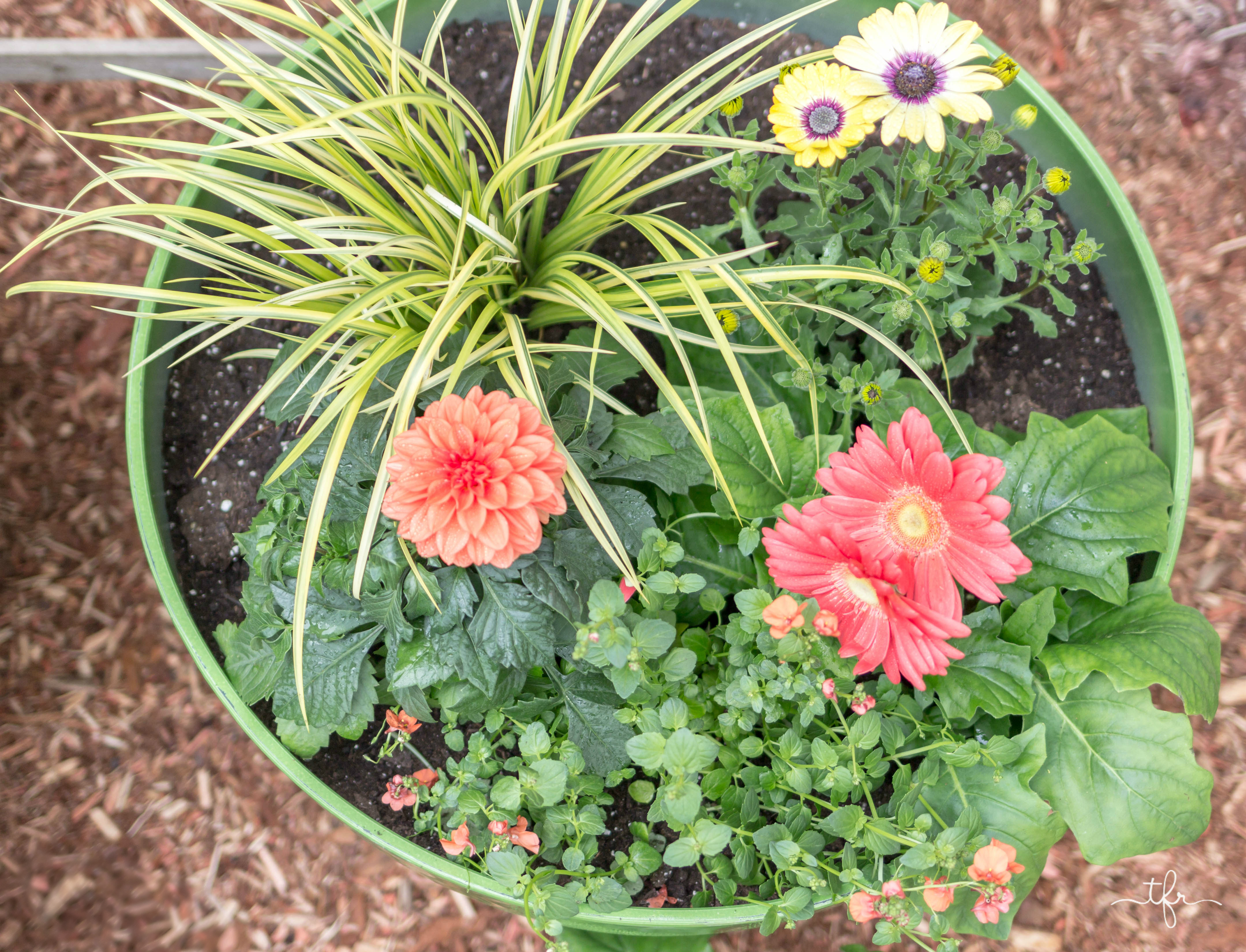 Fill your pots with quality soil specifically made for containers. Don't use just regular old soil from your garden.  It isn't filled with the proper nutrients to sustain healthy plants throughout the season.