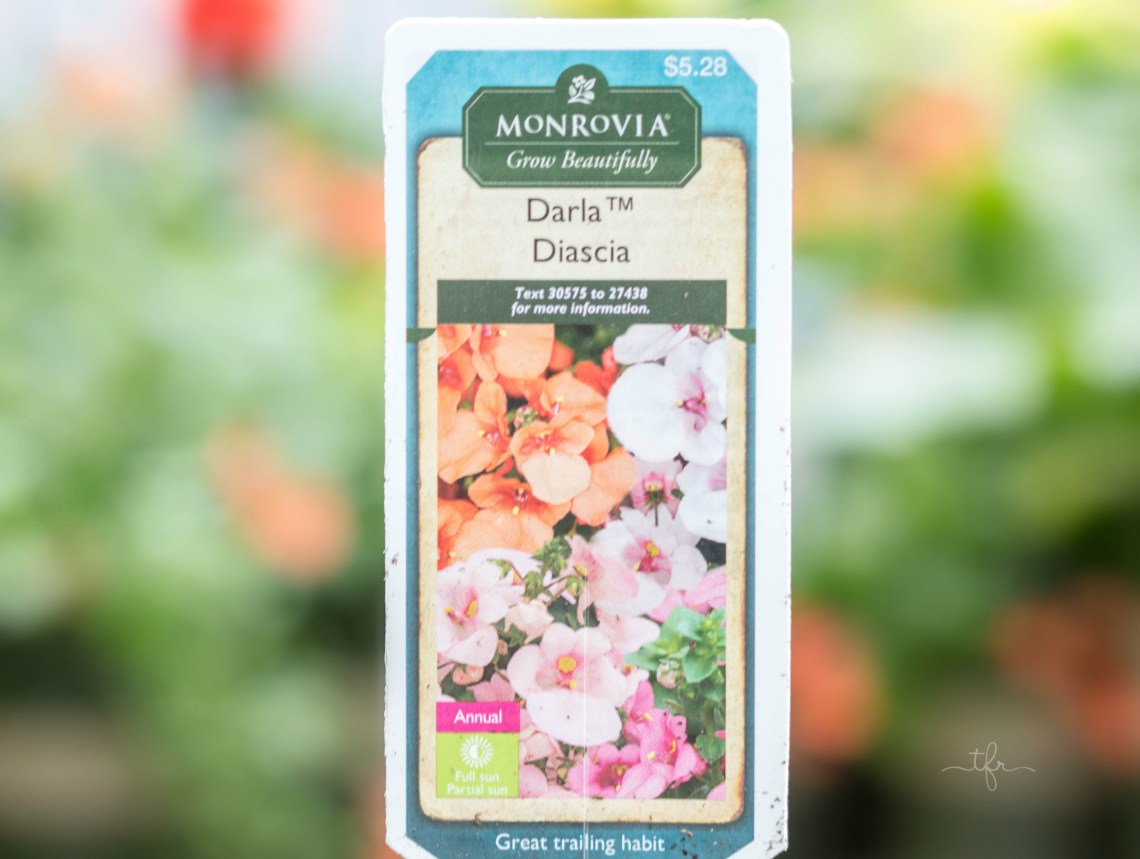 Darla Daiscia This annual plant has a gorgeous mounding and trailing habit. It looks lovely in both container and rock gardens. It features a soft, free-flowering colorful spread that will enhance any garden.