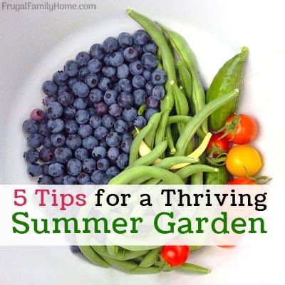 5 Tips for a Thriving Summer Garden - Frugal Family Home