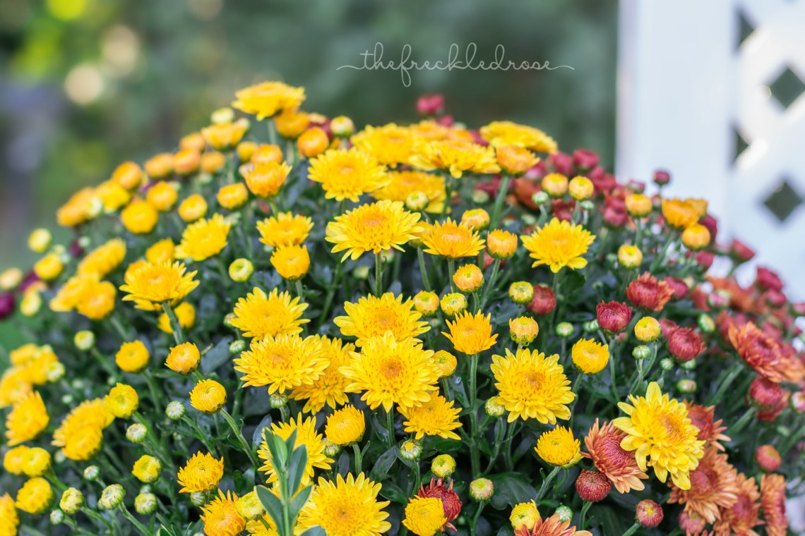 Five Fall Blooming Plants for Your Garden | angiethefreckledrose.com