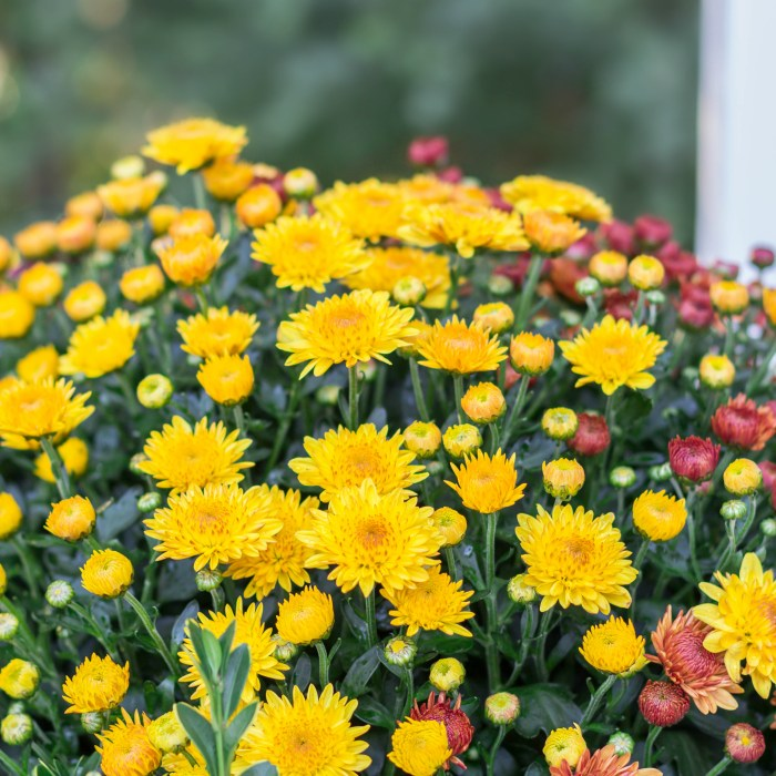 Five Fall Blooming Plants for Your Garden