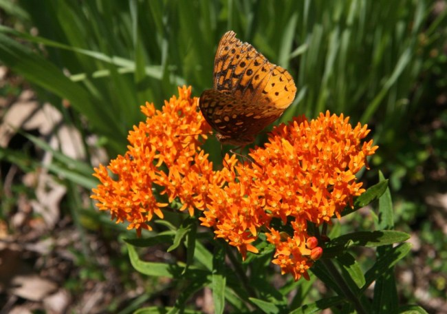 Delightful Garden Guests | Mid-Life Blogger