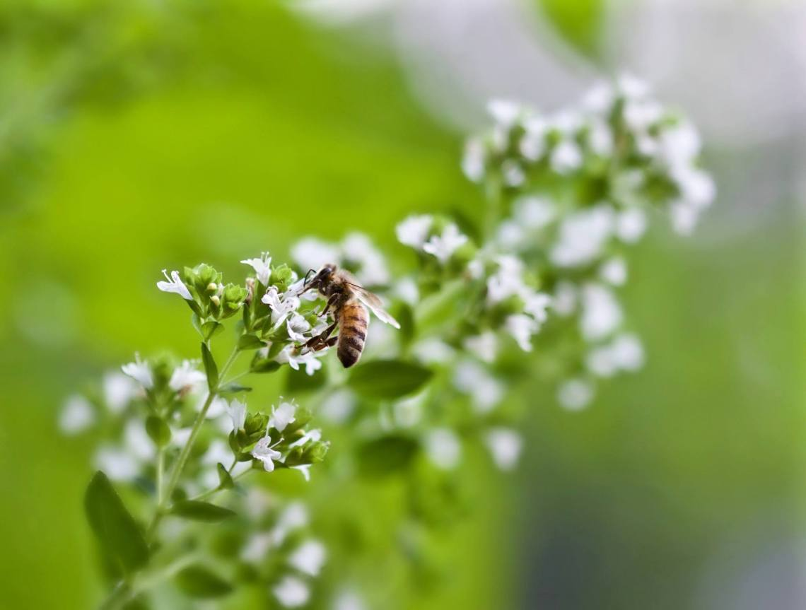 How Homesteading Creates Unbreakable Bonds | angie the freckledrose.com