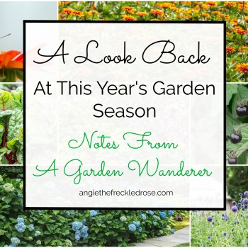 A Look Back At This Year's Garden