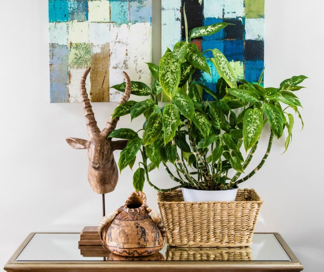 Styling Houseplants | Butterflies and Baubles