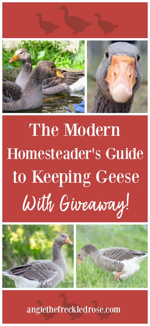 A Book Review & $200 Giveaway: The Modern Homesteader's Guide to Keeping Geese | I have been invited to participate in the book launch and giveaway of The Modern Homesteader's Guide to Keeping Geese by Kirsten Lie-Nielsen sponsored by the Homestead Bloggers Network. YOU could be the lucky winner of a prize package worth $200 featuring this helpful new book.