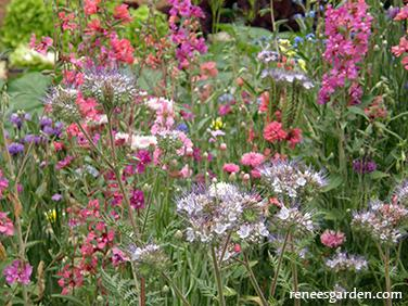 Reneeu0027s Garden Scatter Garden Seeds For A Pollinator Garden | 20 Perfect  Holiday Gifts For Gardeners