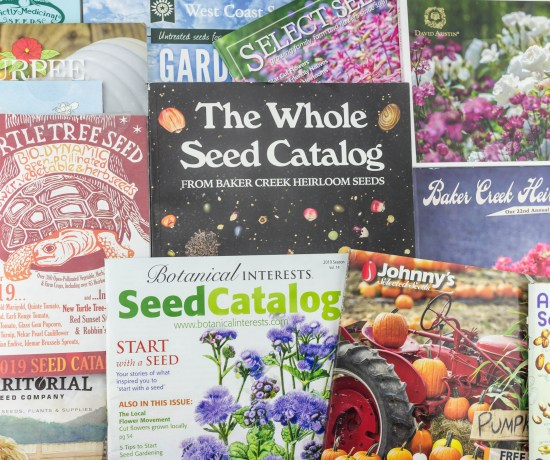 My Favorite Free Seed Catalogs | angiethefreckledrose.com