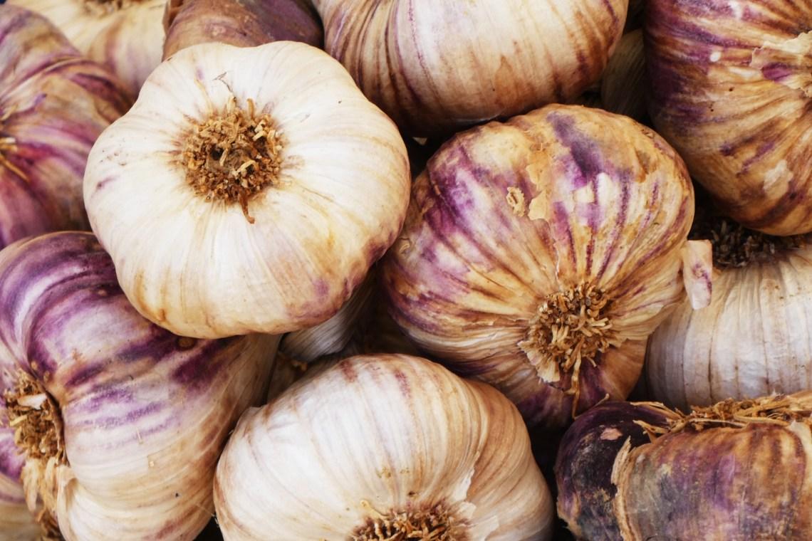 Winter Garden Chores: Planting Garlic
