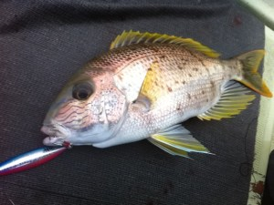 Blue-lined large-eye bream