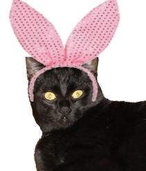 Scaramouche bunny_thumb[1]