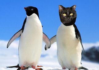 Scaramouche pingouin