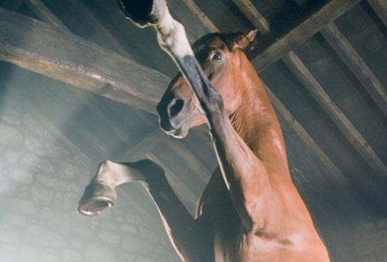 cheval de guerre - 8