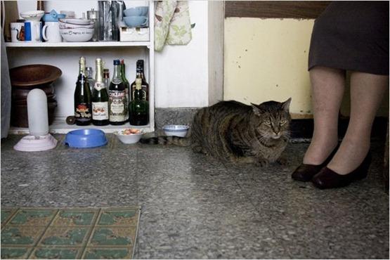 Les vieux chats - 2