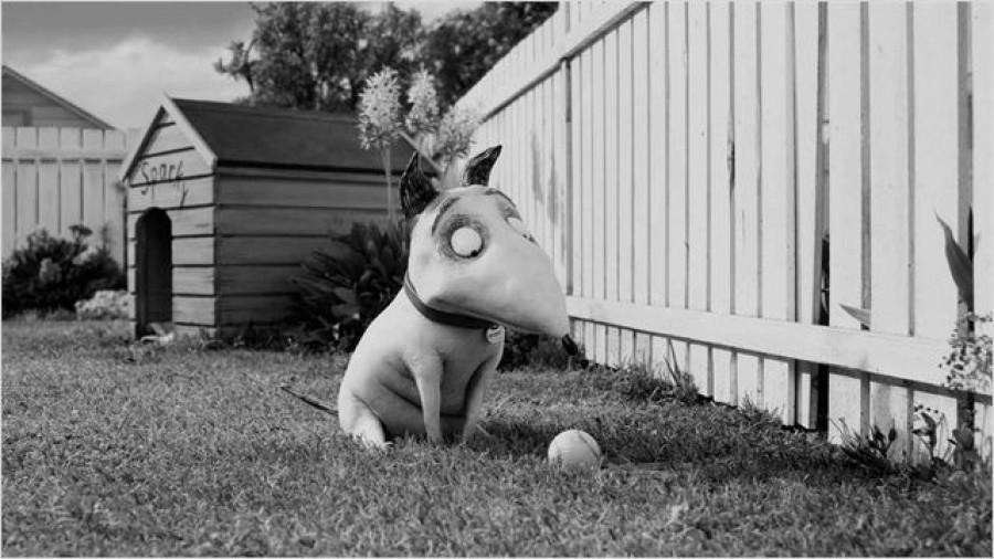 Frankenweenie De Tim Burton Angle S De Vue
