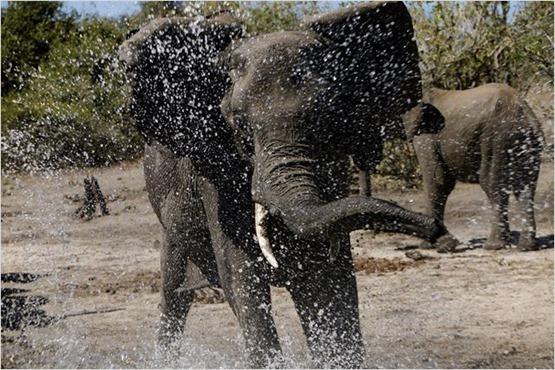 African Safari 3D - 3