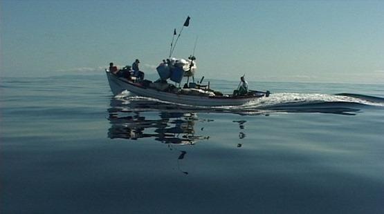 715876-rabo-de-peixe