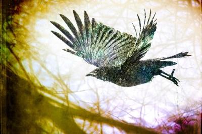 Woodland Crow Spirit full image