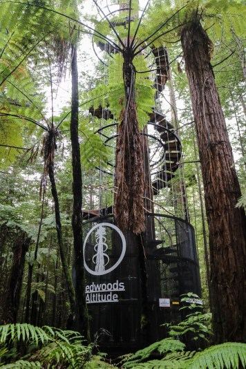Redwoods 01