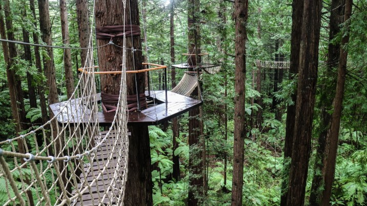 Redwoods 03