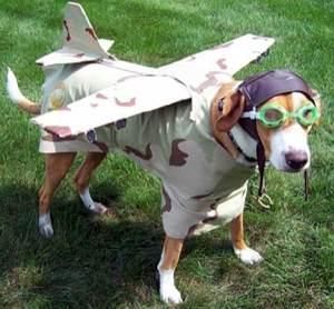perro-piloto