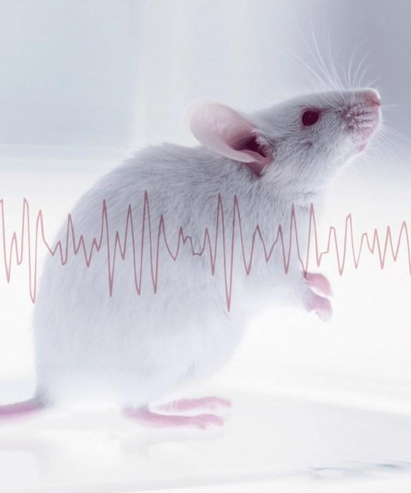 AniLocus | Neuroscience: VAI20 Monitored Animal Chambers