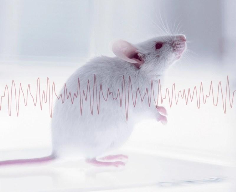 AniLocus   Neuroscience: VAI20 Monitored Animal Chambers