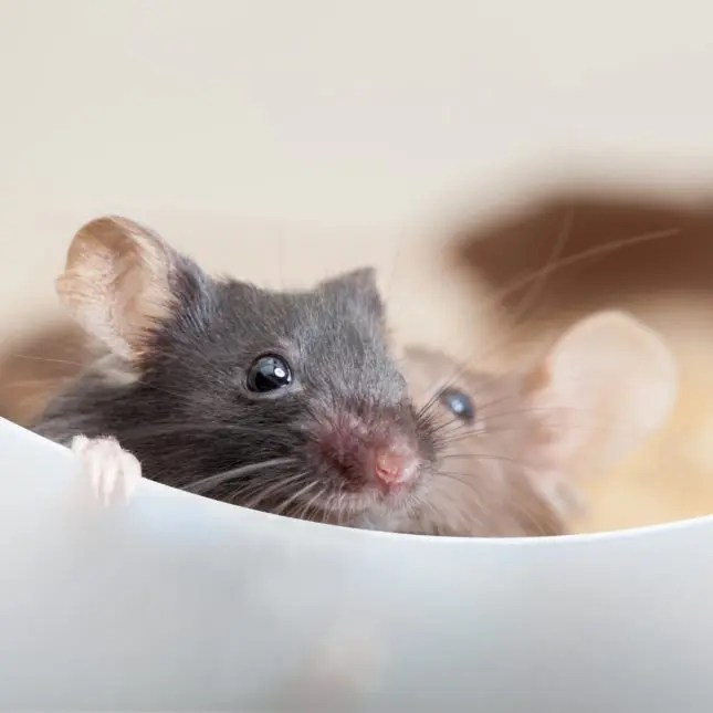 Mouse Models of Locomotor Function | Centre Scientific