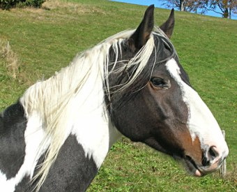 Dankbarkeit, ein Gefühl von Dankbarkeit, Pferd streicheln