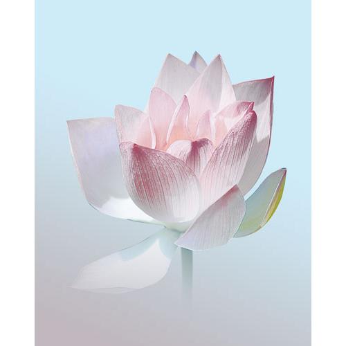 Wandbild Lotus, Bilder für das Wohlbefinden, Wellnessbilder, Energiebilder, Feng Shui bilder, Wanddeko, Leinwandbilder