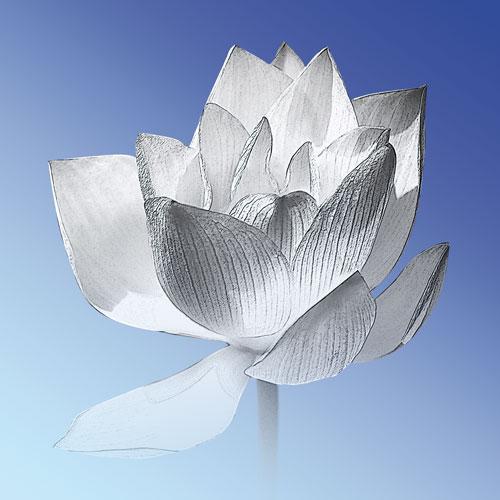 Bild Lotusblume, Mina, Bilder online kaufen, Lotusblume, Bilder für das Wohlbefinden, Wellnessbilder, Energiebilder, Feng Shui bilder, Wanddeko, Leinwandbilder