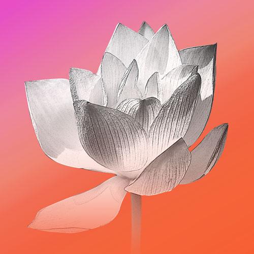 Bild Lotusblume, Mina, Lotusblume, Bilder für das Wohlbefinden, Wellnessbilder, Energiebilder, Feng Shui bilder, Wanddeko, Leinwandbilder