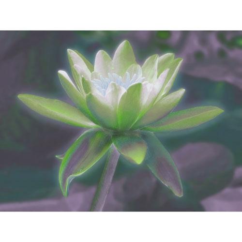 Wandbild Lotusblume, märchen, Lotusblume, Bilder für das Wohlbefinden, Wellness, Energiebilder, Feng Shui bilder, Wanddeko, Leinwandbilder